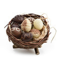 Chocolate Eggs In A Nest - PhotoDune Item for Sale