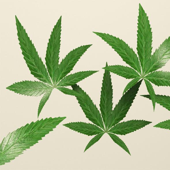 3DOcean Weed Leafs 4303918