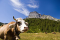 Alpe Veglia mountain pasture - PhotoDune Item for Sale