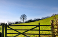 View of a field gate with tree - PhotoDune Item for Sale