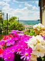 Tuscan Flowers - PhotoDune Item for Sale