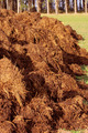manure for organic farming - PhotoDune Item for Sale
