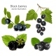 Set of Black Berries with Leaves - GraphicRiver Item for Sale