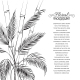 Palm Tree over Bamboo Forest. - GraphicRiver Item for Sale