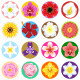 Flower Collection Set - GraphicRiver Item for Sale