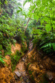 River In Jungle - PhotoDune Item for Sale