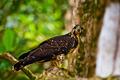Eagle On Tree - PhotoDune Item for Sale