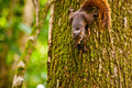 Brown Squirrel On Tree - PhotoDune Item for Sale