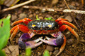 Wild Red Crab - PhotoDune Item for Sale