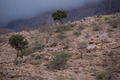 Trees on the Hajar Mountains - PhotoDune Item for Sale