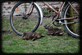 Resting Ducks - PhotoDune Item for Sale