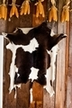 Cattle black and white skin texture on wooden background - PhotoDune Item for Sale