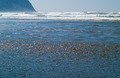 Ocean Waves and Ripples Gently Rolling on the Shoreline - PhotoDune Item for Sale