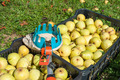 Fruit picker and pears - PhotoDune Item for Sale
