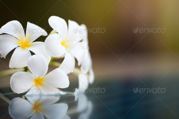 Tropical Flower Plumeria And Water - Stock Photo - Images