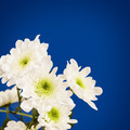 Spring blossom. White flowers. - PhotoDune Item for Sale