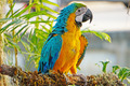 Macaws - PhotoDune Item for Sale