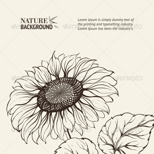 GraphicRiver Illustration of Sunflower 4410886