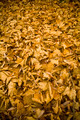 Autumn Leaf Background - PhotoDune Item for Sale
