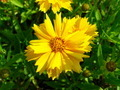 Yellow Flower Petals - PhotoDune Item for Sale