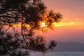 Sunset through pine branches - PhotoDune Item for Sale