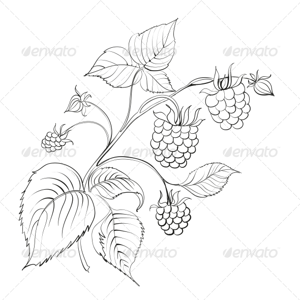 GraphicRiver Raspberry Branch 4416033