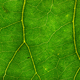 Green Leaf Texture 02 - GraphicRiver Item for Sale
