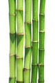 bamboo isolated - PhotoDune Item for Sale