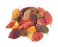 Autumn leaves - PhotoDune Item for Sale