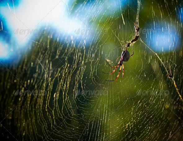 Spider in Web - Stock Photo - Images