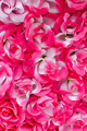 Beautiful pink color roses background - PhotoDune Item for Sale