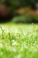 image of fresh spring green grass - PhotoDune Item for Sale