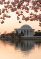 Cherry Blossom and Jefferson Memorial at sunrise - PhotoDune Item for Sale