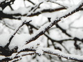 Branches In The Winter - PhotoDune Item for Sale
