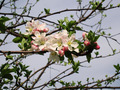 Spring blossom tree with white blossoms 20 - PhotoDune Item for Sale