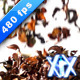 Potpourri 480fps - VideoHive Item for Sale