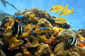 Thriving sea life in a coral reef - PhotoDune Item for Sale