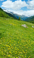 Yellow dandelion flowers on summer mountain slope - PhotoDune Item for Sale