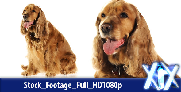 VideoHive Dog 4530813