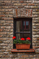 Window with flowers in Europe. Bruges (Brugge), Belgium - PhotoDune Item for Sale