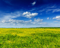 Spring summer background - blooming field meadow - PhotoDune Item for Sale