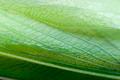 Macro detail of a praying mantis wing - PhotoDune Item for Sale
