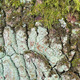 The bark of old oak with a moss - PhotoDune Item for Sale