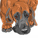 Vector Close-Up Sketch Dog Great Dane Breed - GraphicRiver Item for Sale