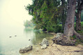 By Lake Bohinj Slovenia - PhotoDune Item for Sale