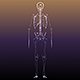 Skeleton of a Human X-Ray Scan Full - GraphicRiver Item for Sale