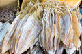 Sun Dried Cuttlefish - PhotoDune Item for Sale