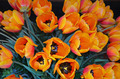Orange tulip floral arrangement - PhotoDune Item for Sale