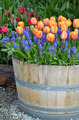 Colorful tulip planter - PhotoDune Item for Sale