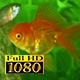 Aquarium And Fish 2 - VideoHive Item for Sale